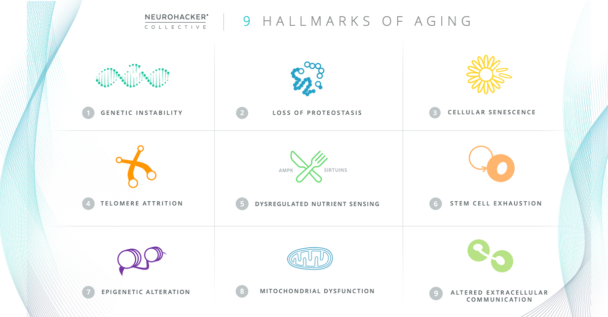 The 9 Hallmarks of Aging