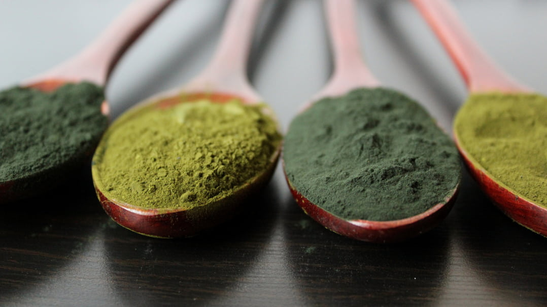 Why Algae is a Powerful Longevity and Detox Hack - A Q+A With the Founder of ENERGYbits