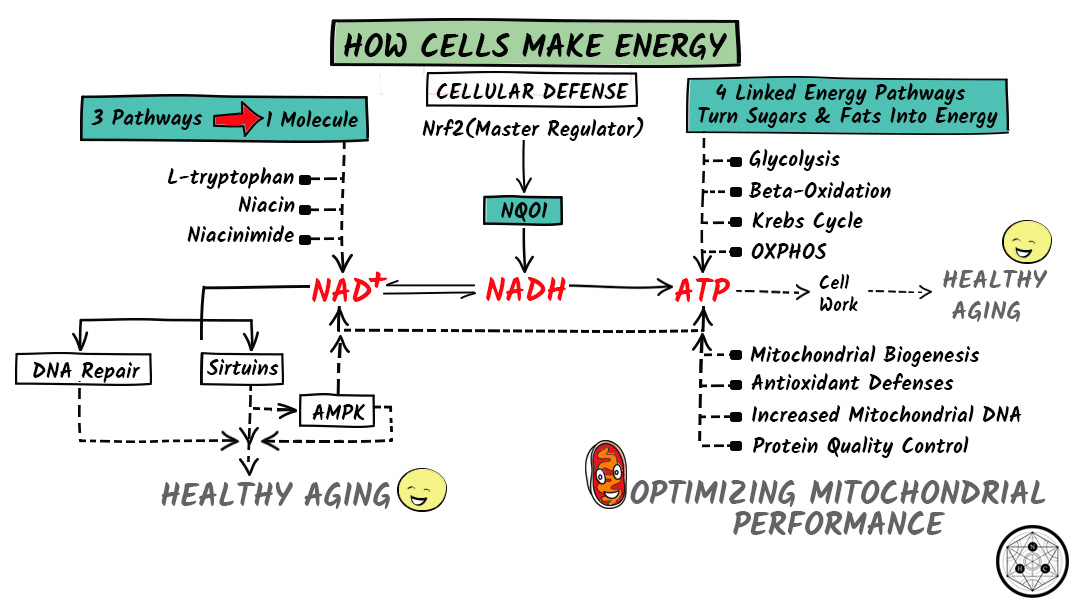 active reading introduction to cells answer key