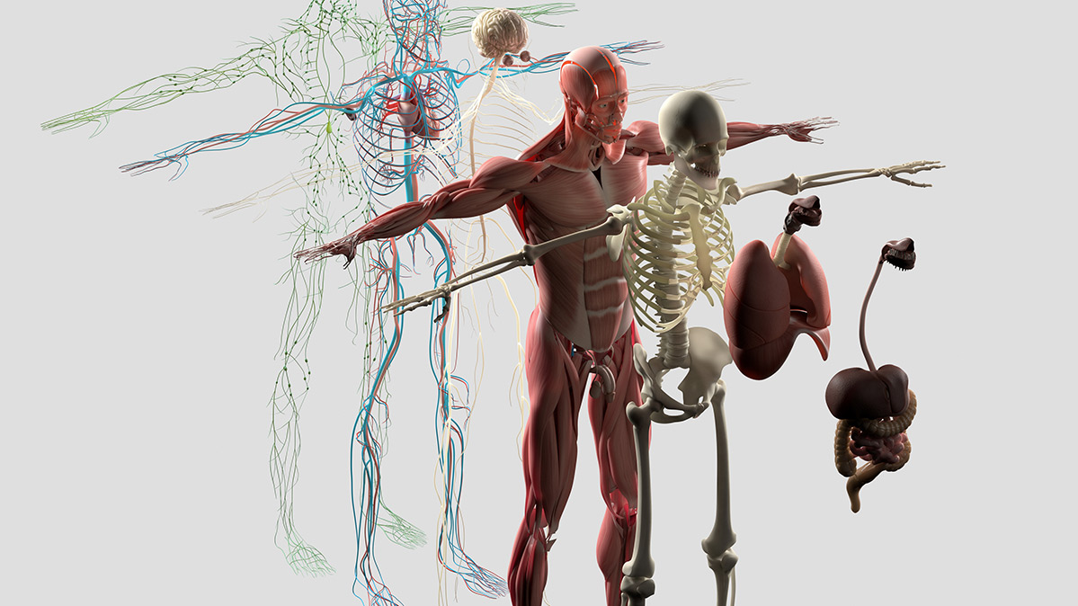 How Does The Immune System Work? Part 2: The Adaptive Immune System