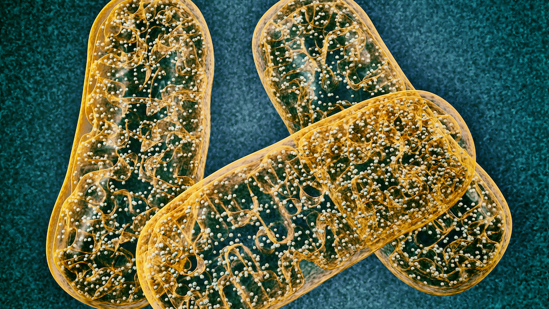 Mitochondria: Exploring 5 Lifestyle Habits to Benefit Cell Health