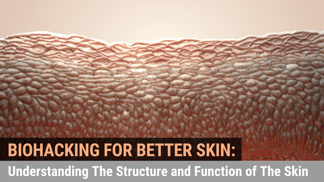 Biohacking for Better Skin: Understanding The Structure and Function of The Skin