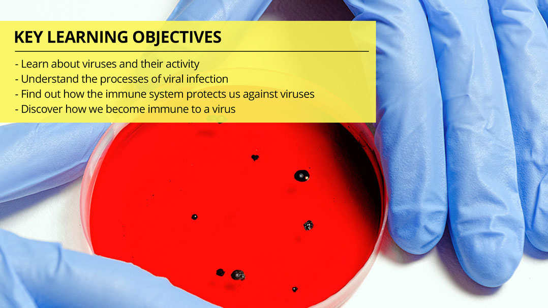 Antiviral Immunity: Understanding Viruses and How the Immune System Responds to Viral Infections