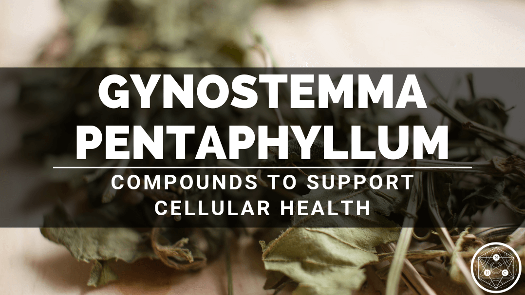 Benefits of Gynostemma pentaphyllum Whole Herb Extract