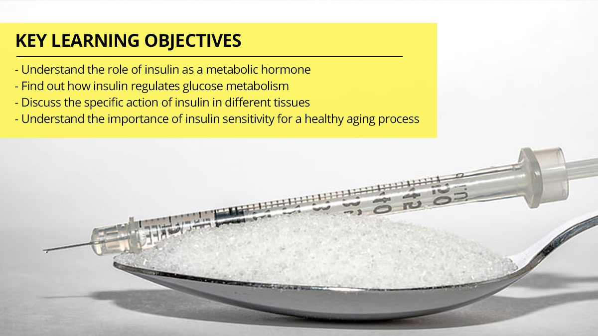 What Is Insulin? Understanding The Role of Insulin in Metabolism and Healthy Aging