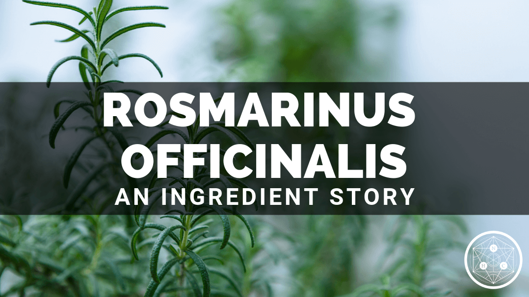 Rosmarinus officinalis Leaf Extract: Sources And Benefits