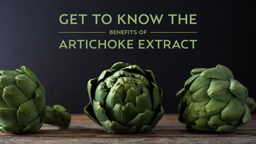 Get to Know the Benefits of Artichoke Extract
