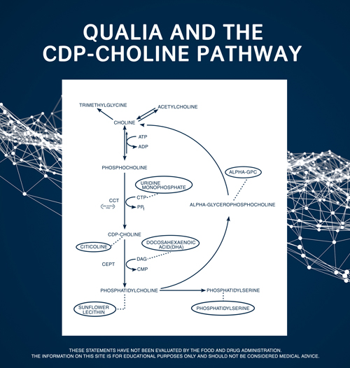 Qualia and the CDP-Choline Pathway