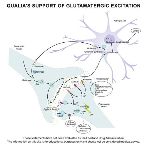 Qualia support of Glutamatergic excitation
