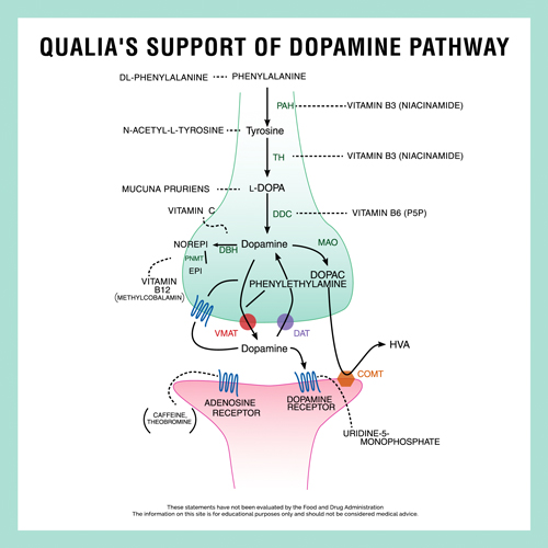 Qualia's Support of Dopamine Pathway