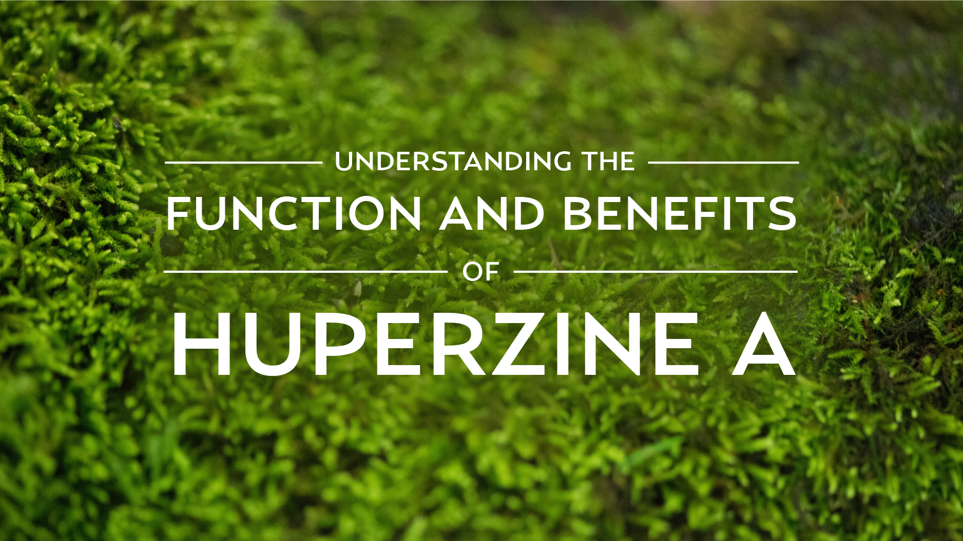 Understanding the Function and Benefits of Huperzine A