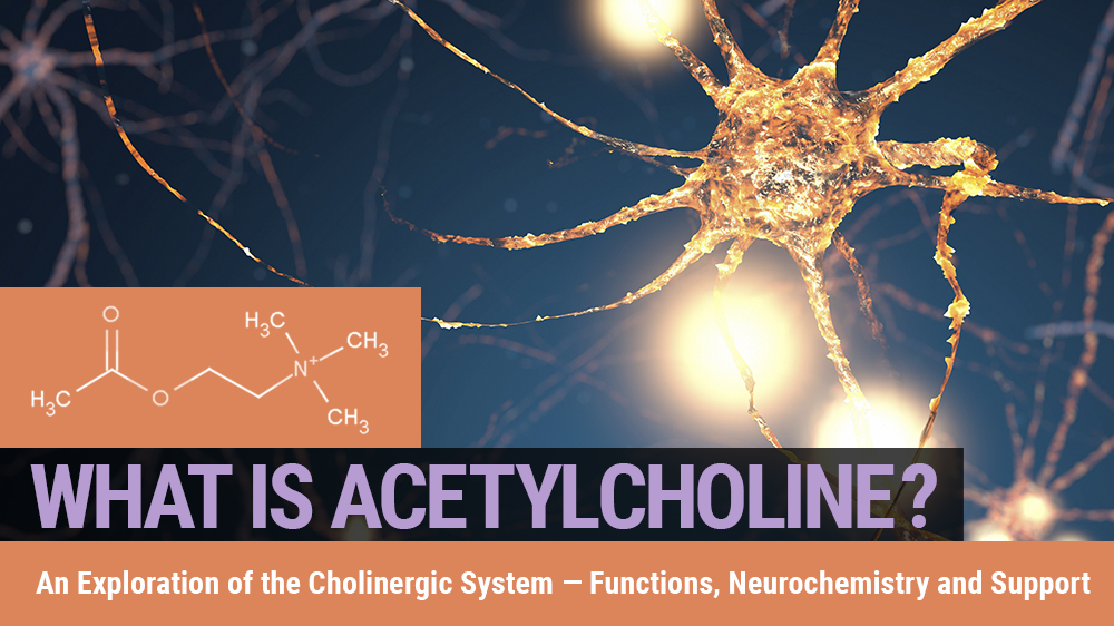 What is Acetylcholine? An Exploration of the Cholinergic system — Functions, Neurochemistry and Support