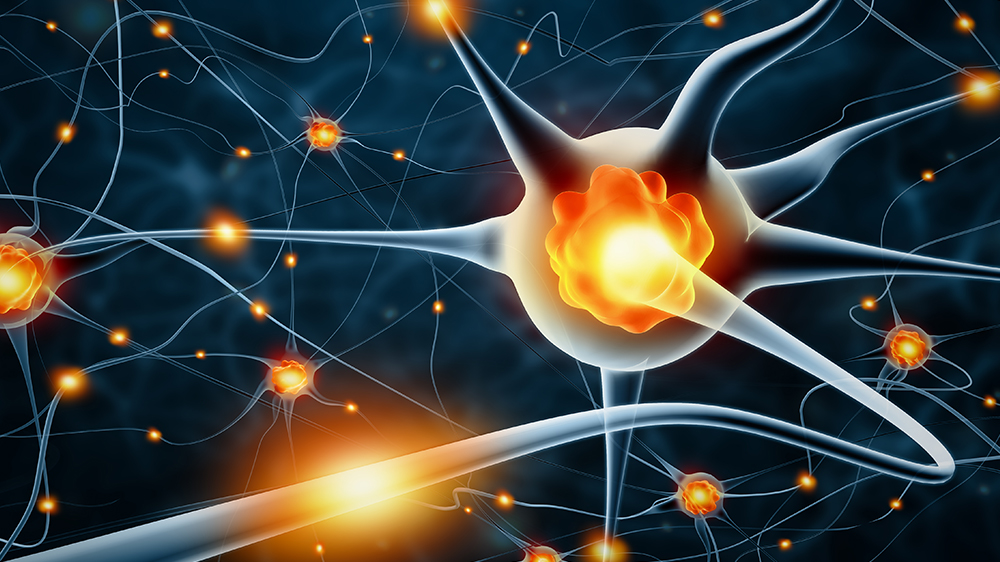 What is Neurogenesis? Definition, Mechanisms, and its Role in Brain Plasticity